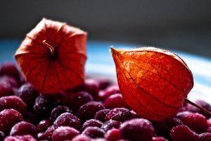 Cranberry Season